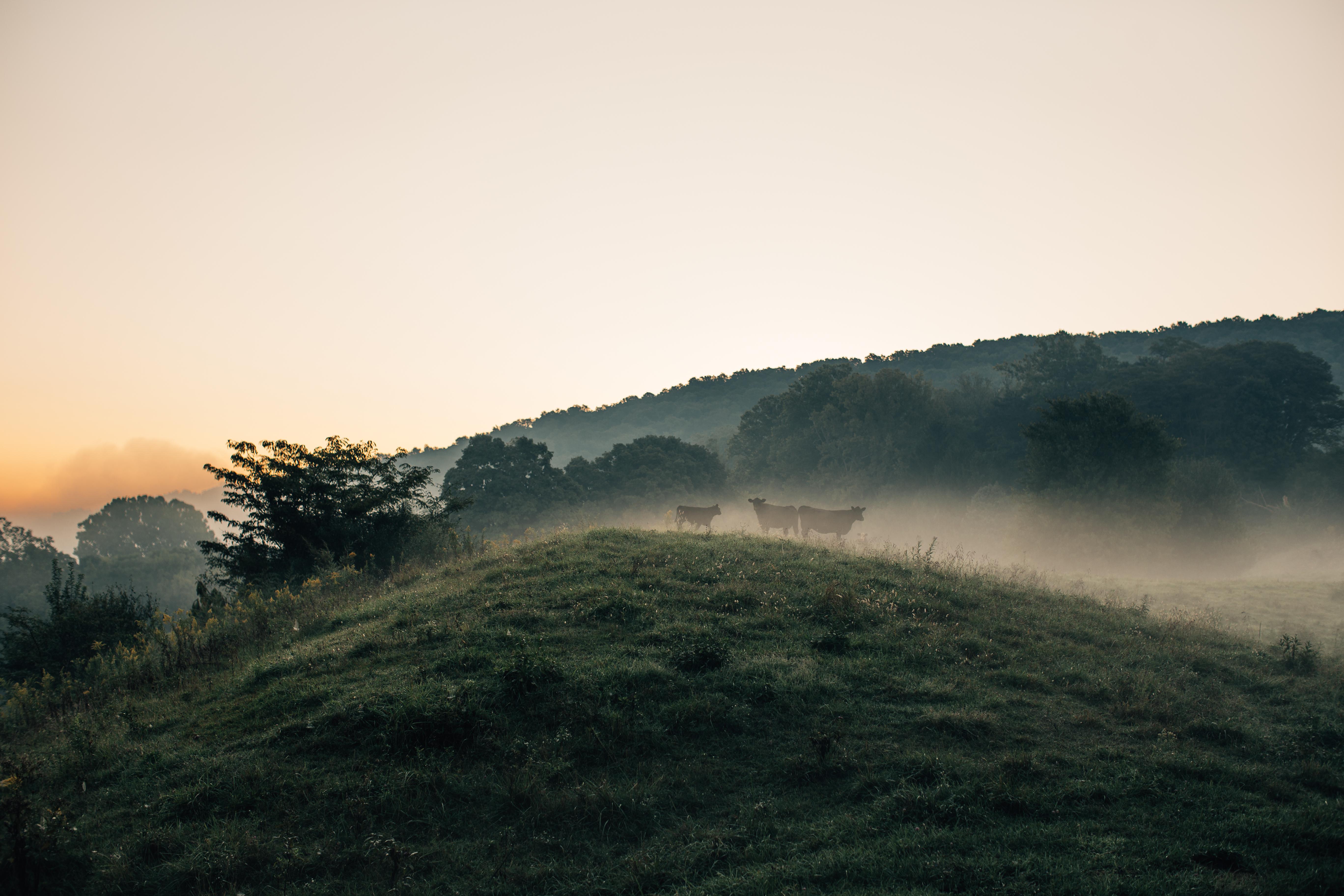 Beautiful farm vista
