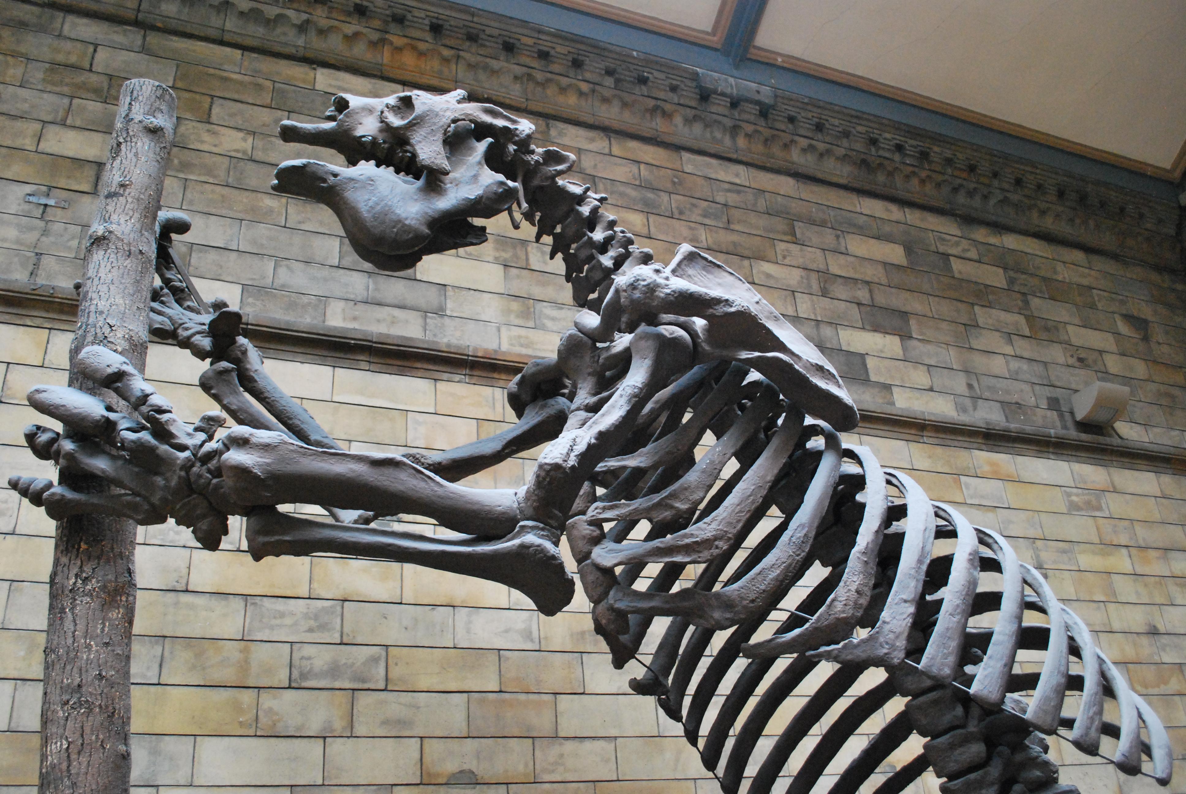 dino-at-natural-history-museum