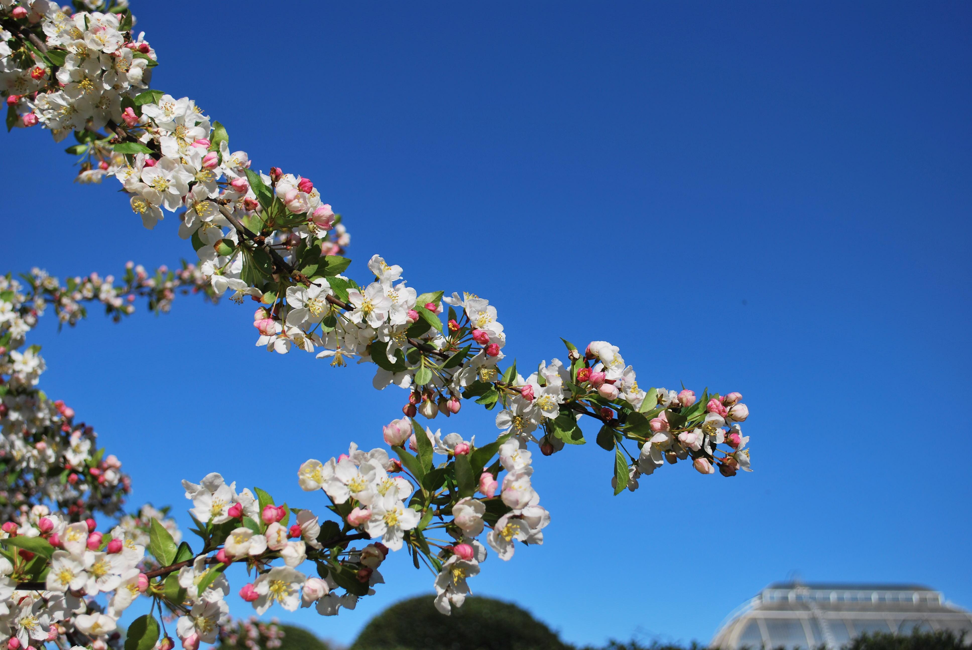 springtime at kew gardens